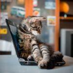 Котенок сидит на ноутбуке