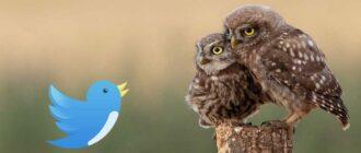 Заработок в Твиттер