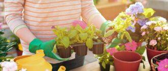 Цветоводство комнатные растения